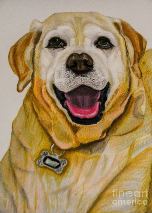 Labrador Greeting Card featuring the drawing Labrador Retriever Drawing by Zina Stromberg