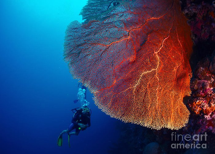 Big Greeting Card featuring the photograph Lady Diver Exploring Tropical Bright by Dudarev Mikhail