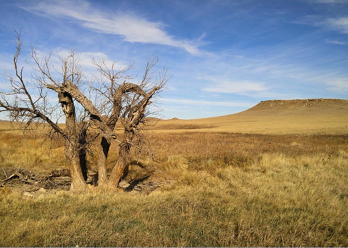 Tree Greeting Card featuring the photograph Last Stand by Carl Young