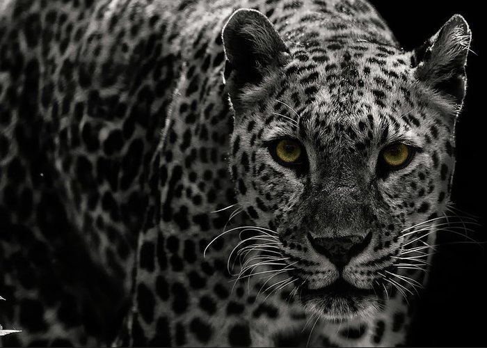 Big Cat Greeting Card featuring the photograph Leopard by Somak Pal