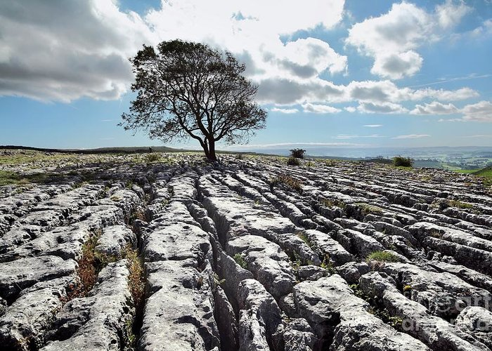Limestone Greeting Card featuring the photograph Limestone Pavement And Tree by Martin Bond/science Photo Library