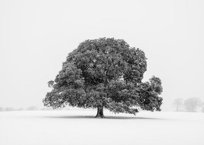 Scenics Greeting Card featuring the photograph Lone Holm Oak Tree In Snow, Somerset, Uk by Nick Cable