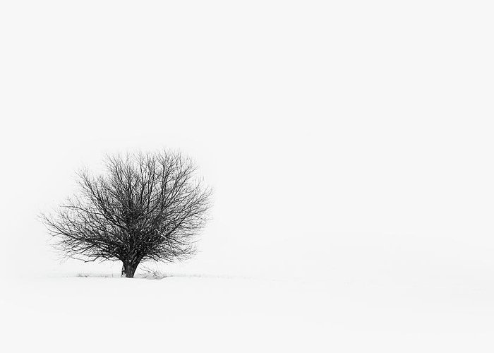 Tranquility Greeting Card featuring the photograph Lone Tree by Jrj-photo