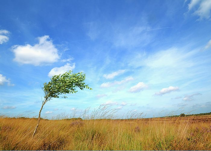 Scenics Greeting Card featuring the photograph Lonesome Tree Swept By The Wind by Nikitje
