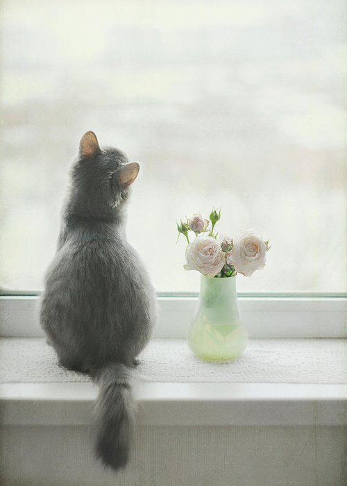 Pets Greeting Card featuring the photograph Longing For Spring by Have A Good Day!