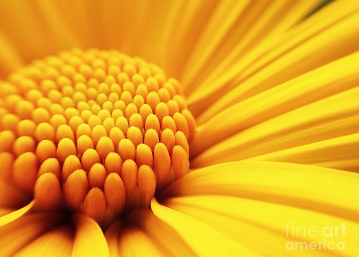 Love Greeting Card featuring the photograph Macro Shot Yellow Flower Background by Madcat madlove