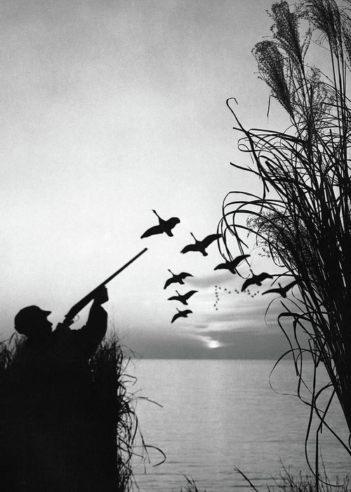 Rifle Greeting Card featuring the photograph Man Duck-hunting by Stockbyte