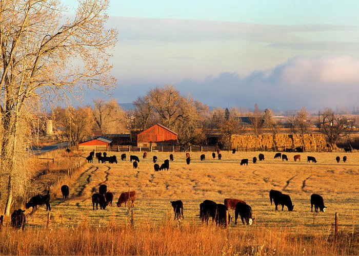 Scenics Greeting Card featuring the photograph Morning Farm Scene by Beklaus