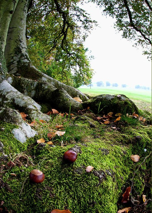 Nut Greeting Card featuring the photograph Nuts And Fallen Leaves At The Foot Of A by John Short / Design Pics