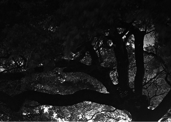 Oak Tree At Night Greeting Card featuring the photograph Oak Tree At Night by Edward Swearingen