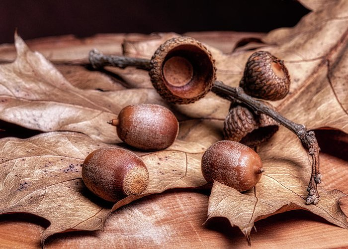 Nature Greeting Card featuring the photograph Oak Tree Macro by Tom Mc Nemar