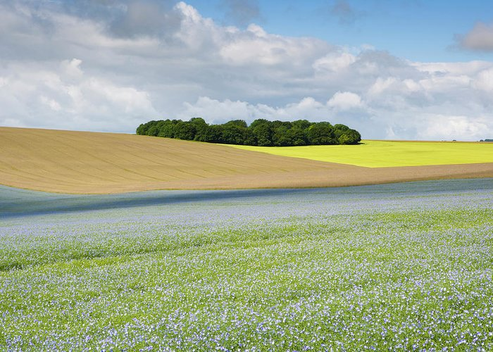 Flax Seed Greeting Card featuring the photograph Oilseed Flax, Wiltshire U.k by Antonyspencer