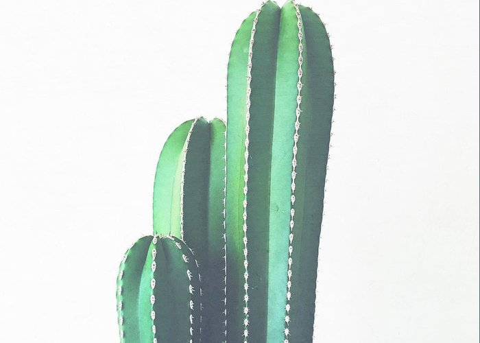 Cactus Greeting Card featuring the photograph Organ Pipe Cactus by Cassia Beck