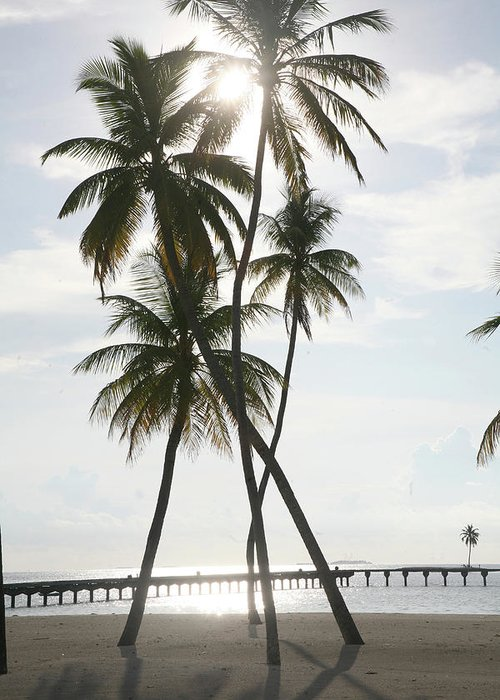 Tropical Tree Greeting Card featuring the photograph Palm Trees On A Beach by Win-initiative