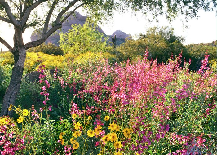 Scenics Greeting Card featuring the photograph Phoenix Botanical Gardens by Richard Felber