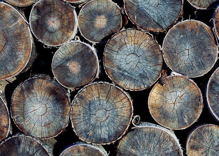 Lumber Industry Greeting Cards