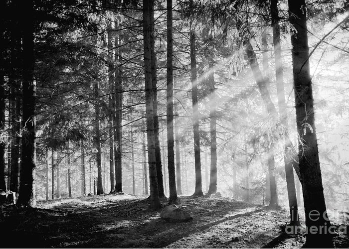 Harmony Greeting Card featuring the photograph Pine Tree With Lights And Fog,black And by Hofhauser