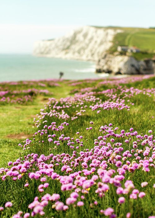Scenics Greeting Card featuring the photograph Pink Coastal Path by S0ulsurfing - Jason Swain