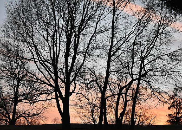 Trees Greeting Card featuring the photograph Pink Sky by Cassidy Marshall