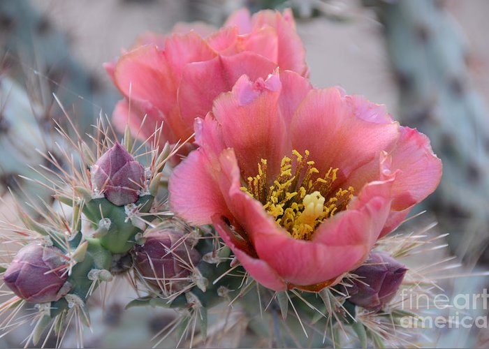 Opuntia Greeting Cards