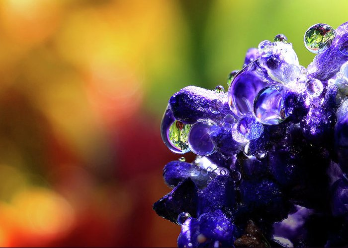 Water Drops Greeting Card featuring the photograph Purple Rain by Gary Yost