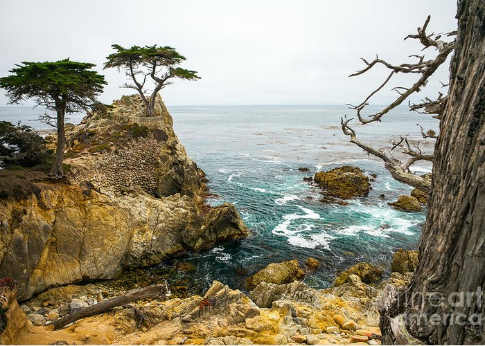 Big Greeting Card featuring the photograph Rocky Cliff And Trees In Carmel Near by Lynn Yeh
