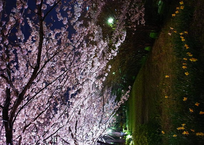Tranquility Greeting Card featuring the photograph Sakura Blossom by Hamachi!'s Getty Images Photo
