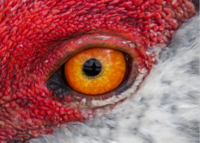 Eyes Greeting Card featuring the photograph Sandhill Crane Eye by Zina Stromberg