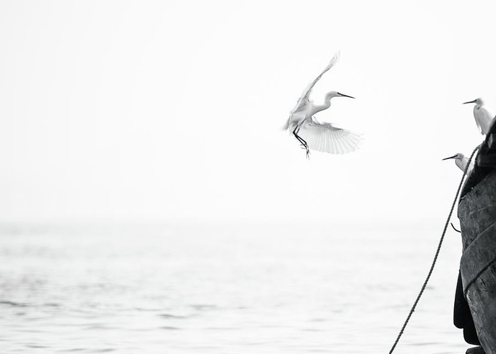 Animal Themes Greeting Card featuring the photograph Sea Birds Of Shekou Shenzhen by Capturing A Second In Life, Copyright Leonardo Correa Luna