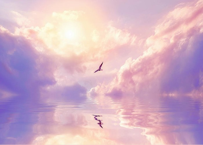 Fairy Tale Greeting Card featuring the photograph Seagull And Violet Clouds by Jane Khomi