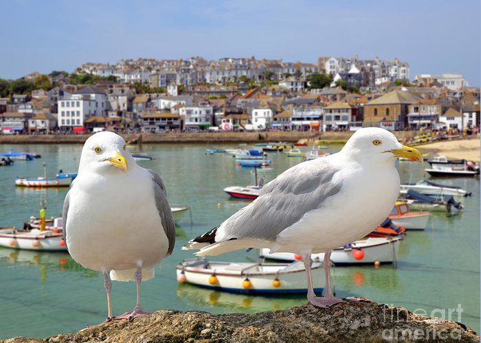 Big Greeting Card featuring the photograph Seagulls In St Ives Harbour Cornwall by Jaroslava V