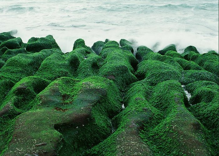 Scenics Greeting Card featuring the photograph Seaweed by Tsun
