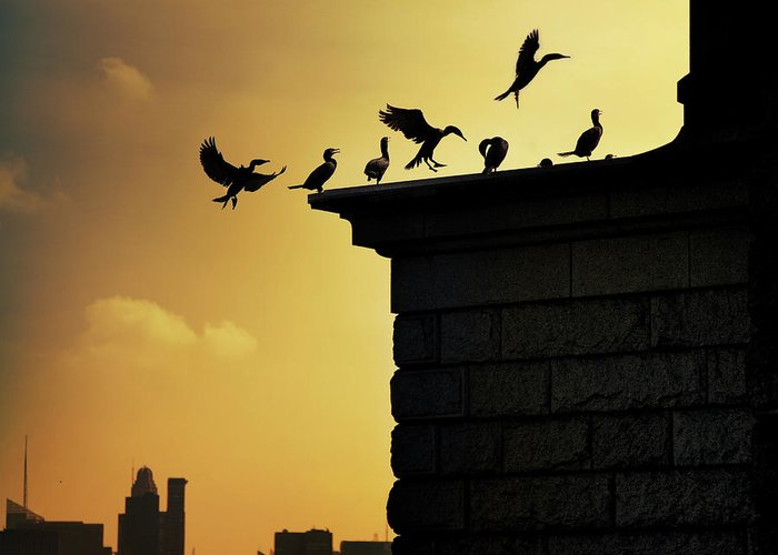 Central Park Greeting Card featuring the photograph Silhouettes Of Cormorants by Istvan Kadar Photography
