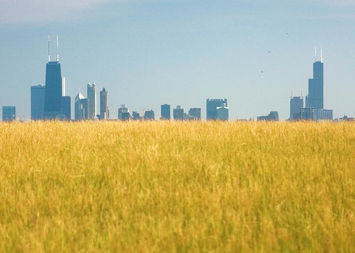 Grass Greeting Card featuring the photograph Skyscrapers Arising From Grass by By Ken Ilio