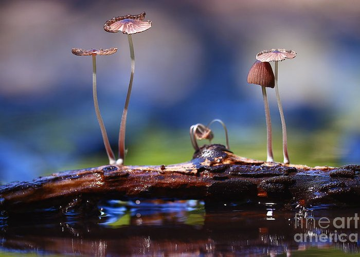 Toadstools Greeting Cards