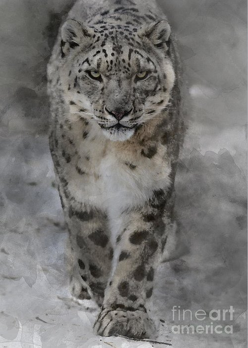 Allenfoto Greeting Card featuring the photograph Snow Leopard II by Brad Allen Fine Art