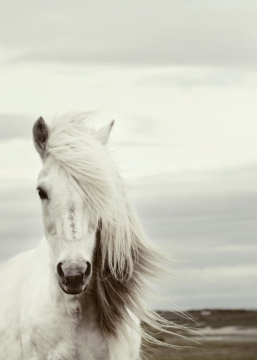 Horse Greeting Card featuring the photograph ísold by Gigja Einarsdottir