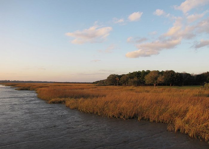 Scenics Greeting Card featuring the photograph South Carolina Marsh In The Afternoon by Daniela Duncan