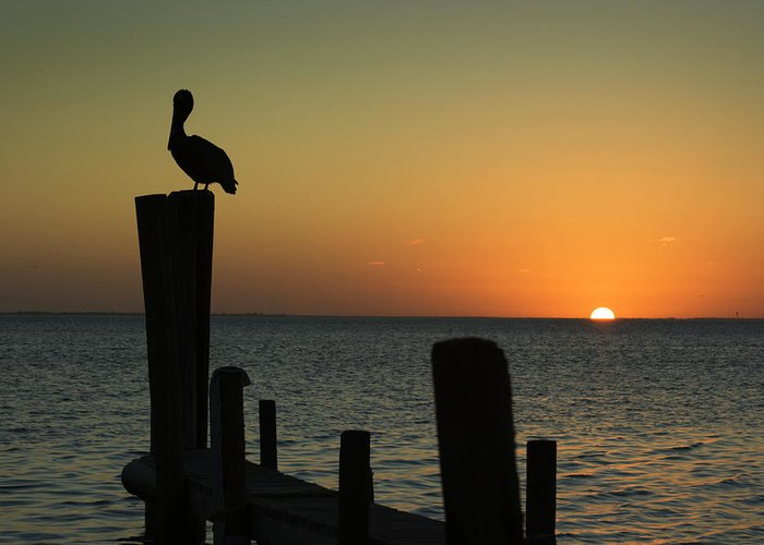 Orange Color Greeting Card featuring the photograph South Padre Island, Texas Sunset With by Yangyin