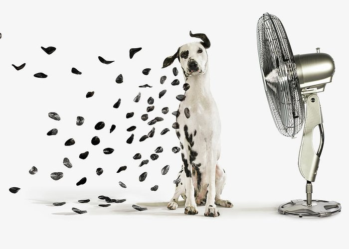 Pets Greeting Card featuring the photograph Spots Flying Off Dalmation Dog by Gandee Vasan