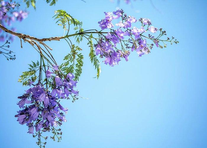 Jacaranda Tree Greeting Card featuring the photograph Springtime Beauty by Az Jackson
