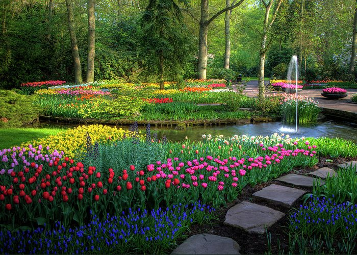 Netherlands Greeting Card featuring the photograph Springtime Keukenhof Gardens With by Darrell Gulin