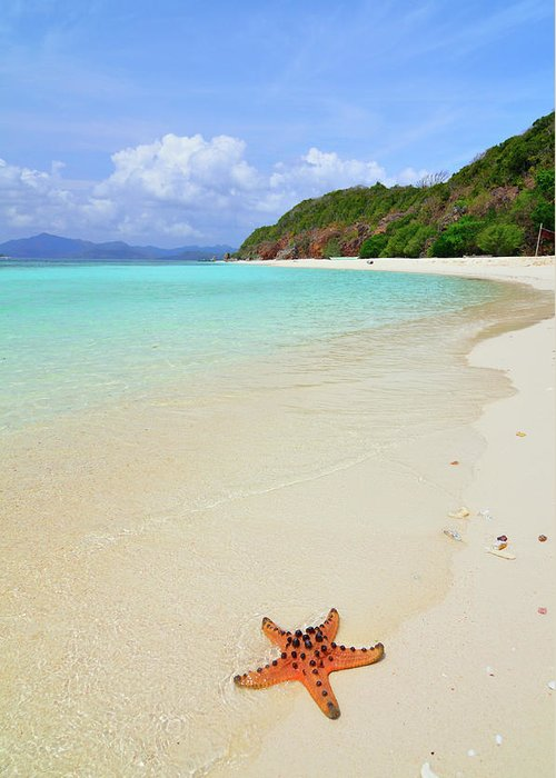 Water's Edge Greeting Card featuring the photograph Starfish On Beach Sand by Joyoyo Chen