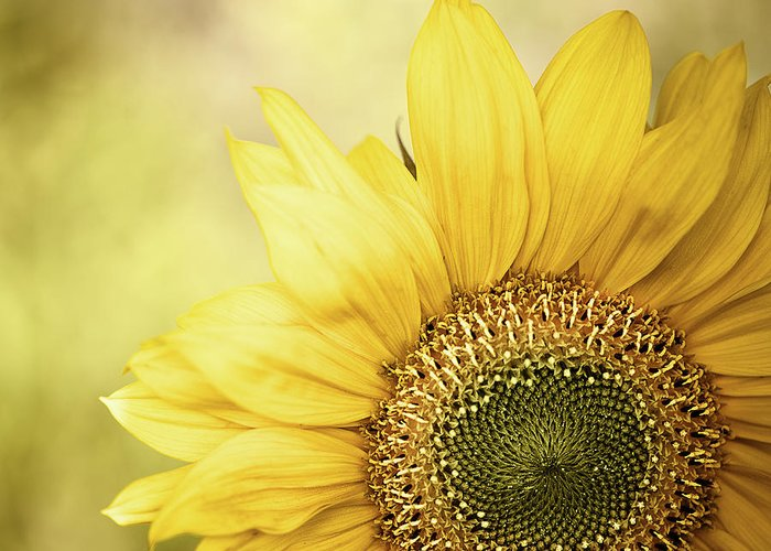 Outdoors Greeting Card featuring the photograph Sunflower Blossom With Bokeh Background by Elisabeth Schmitt