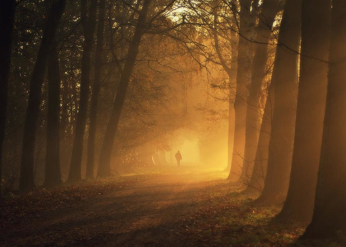 People Greeting Card featuring the photograph Sunlight Passing Through Trees In Autumn by Bob Van Den Berg Photography