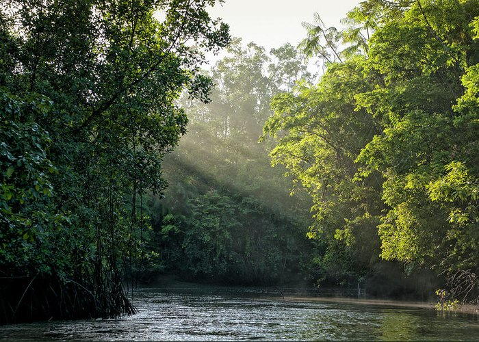 Tropical Rainforest Greeting Card featuring the photograph Sunlight Shining Through Trees On River by Brasil2