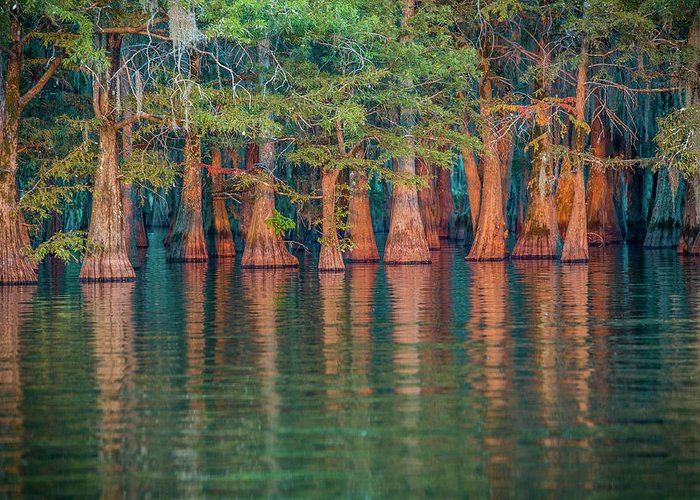 Cypress Trees Greeting Card featuring the photograph Sunset On Concordia Lake by SL Ernst