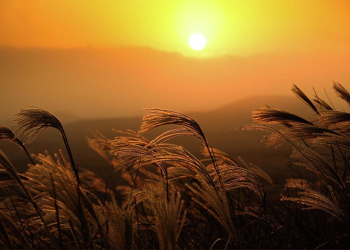 Tranquility Greeting Card featuring the photograph Sunset, Reeds And Wind by Douglas Macdonald