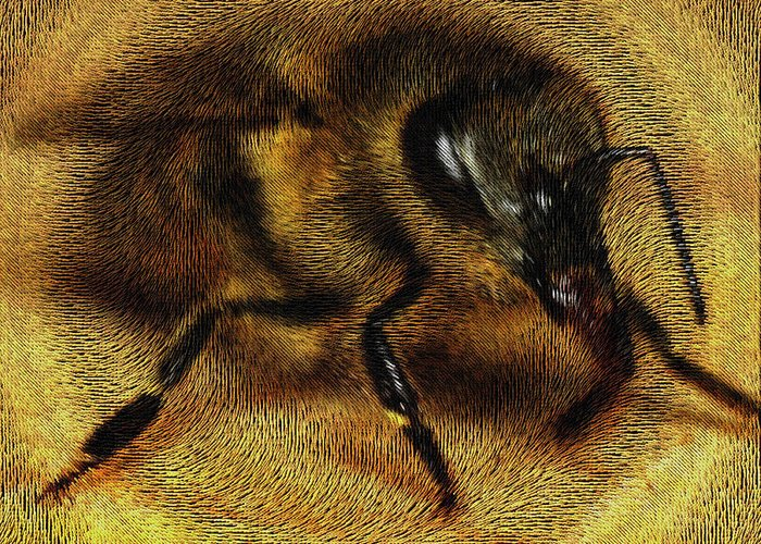 Bee Greeting Card featuring the digital art The Killer Bee by ISAW Gallery