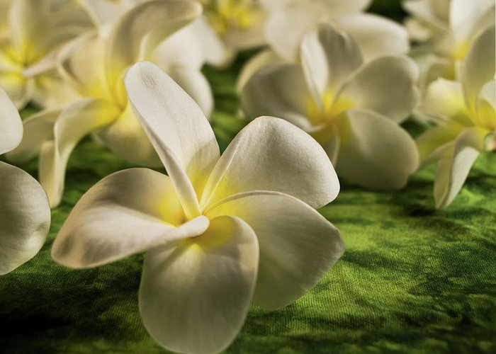 Honolulu Greeting Card featuring the photograph The Light Within by Melinda Podor